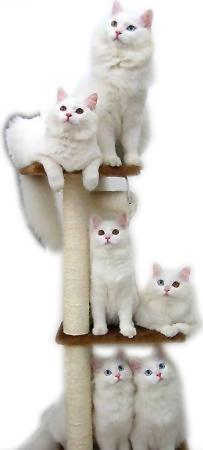 El diván: El gato