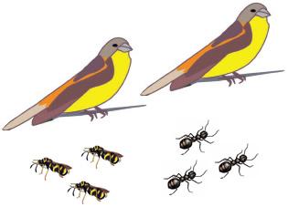 De abejas, aves y hormigas