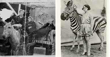 ¿De dónde nace la tradición de una fotografía al lado de un burro-cebra?