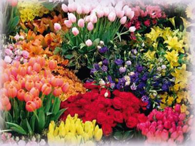 Las flores de mi memoria