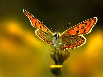 """La Mariposa (en su mundo y fuera de él.) """"espacios alados pletóricos de luz, belleza…"""""""